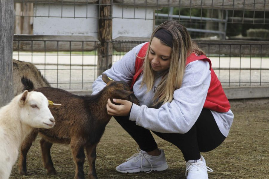 """Senior Logan Asbury pets a goat at Deanna Rose. """"We played with [the kids] and made sure they didn't get hurt,"""" she said."""