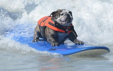 Surf's Up Dog