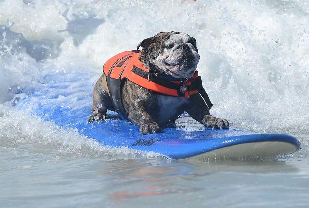 Surf's Up Dog