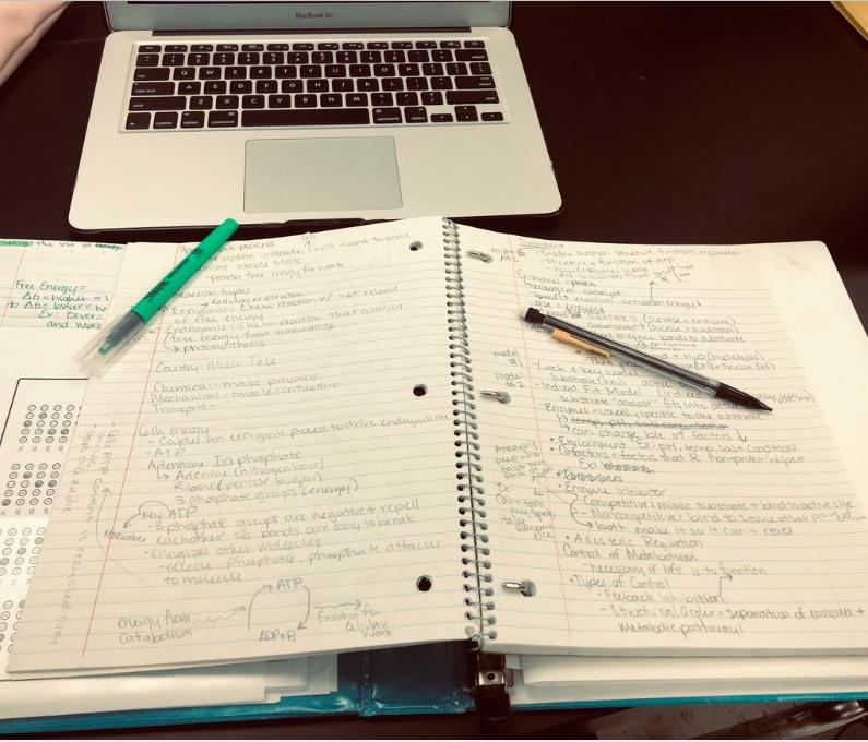 Is Homework Necessary?