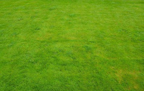 Anti-Lawn